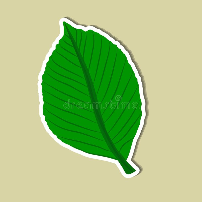 Leaf of simple. Color illustrations vector illustration