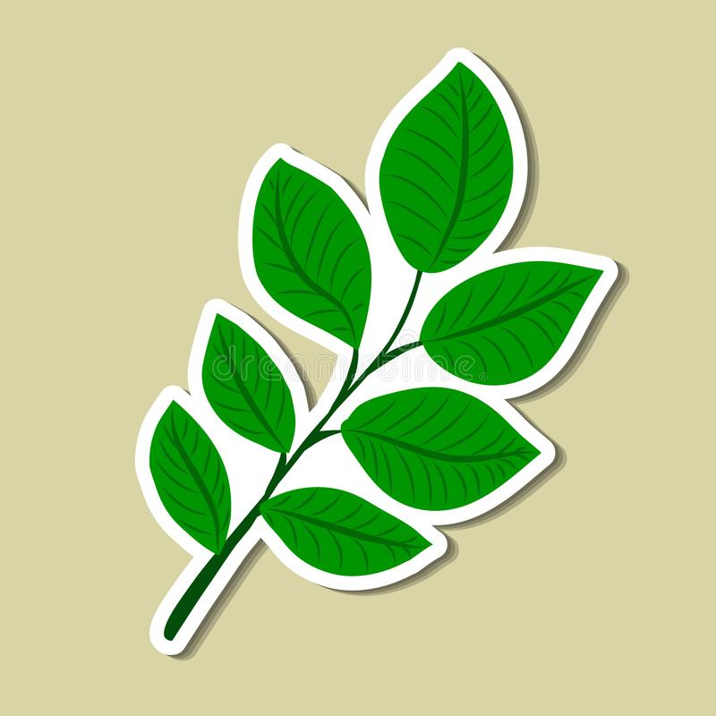 Leaf of simple. Color illustrations royalty free illustration