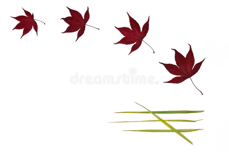 Leaf Simplicity. Four acer leaves and four bamboo leaves arranged in a pattern against a white background royalty free illustration