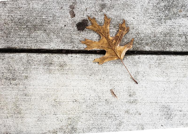 Single brown leaf laying on the ground royalty free stock photography