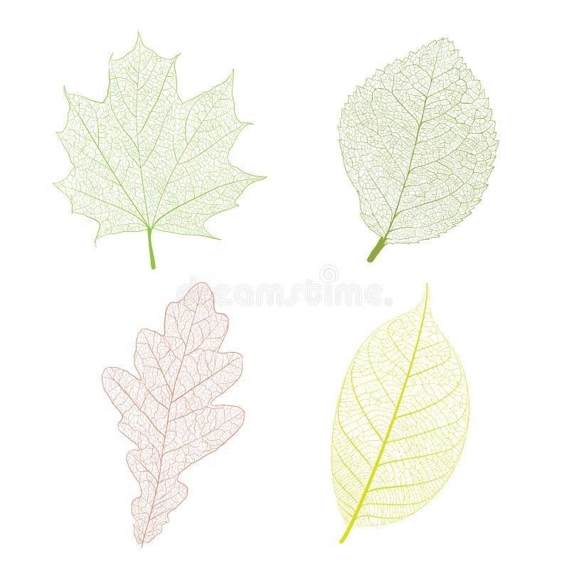 Leaf skeleton. Set on white background royalty free illustration