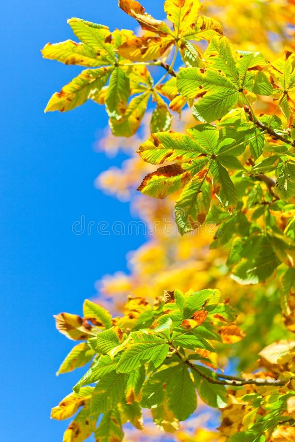Leaf, Sky, Branch, Tree stock photos