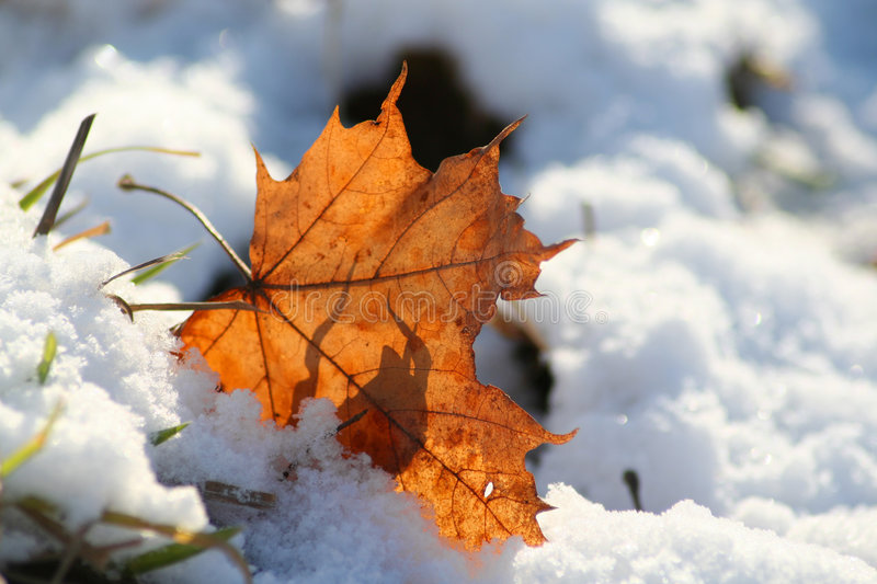 Leaf and snow royalty free stock photo
