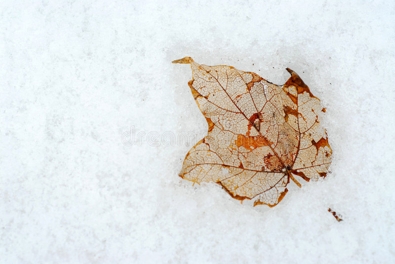 Leaf on snow stock photography