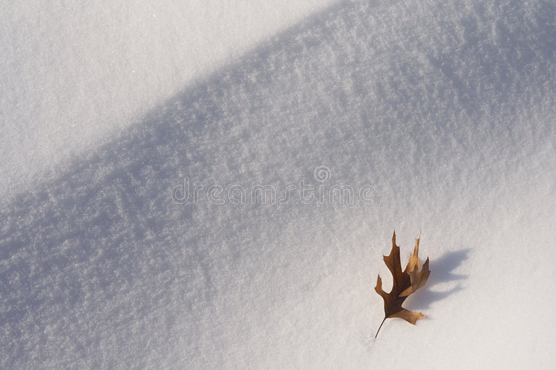 Download Leaf on Snow stock image. Image of drift, perseverance - 7109483