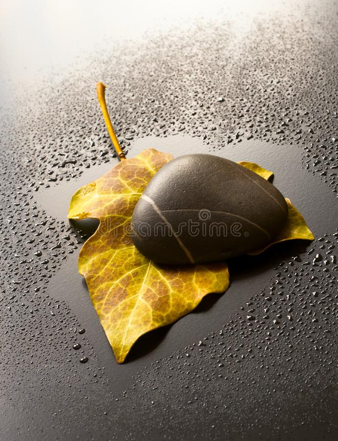 Download Leaf and Stone stock image. Image of droplet, abstract - 14500375