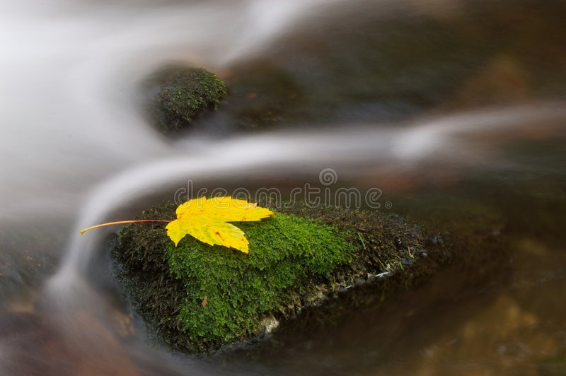 Leaf on stone royalty free stock images