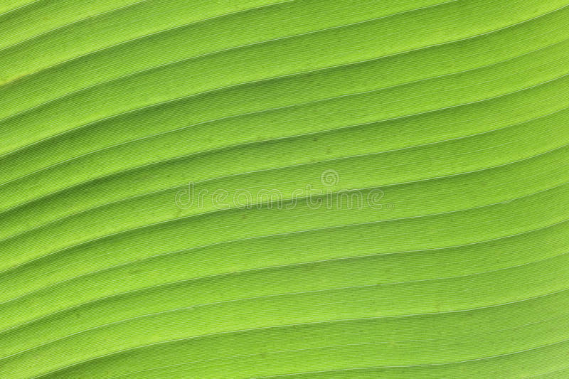 Download Leaf structure stock image. Image of detail, space, surface - 83709843