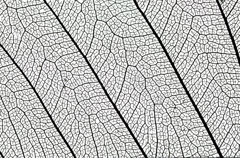 Leaf structure detail stock image