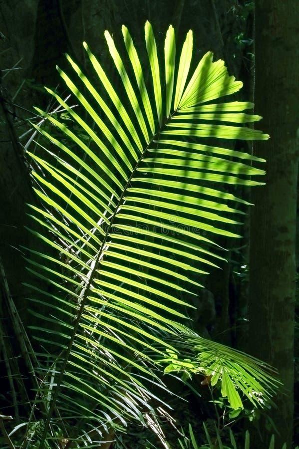 Leaf in sun stock photos