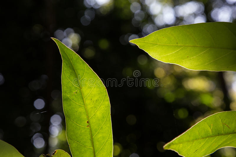 Leaf on a sunny day stock photo