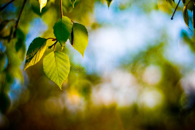 Leaf sunset royalty free stock images