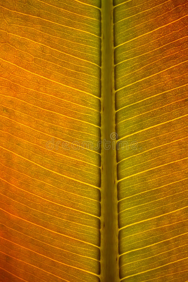 Download Leaf surface. stock image. Image of textured, symmetry - 20535225