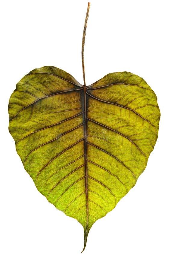 Download Leaf surface stock image. Image of backgrounds, leaf - 23760517