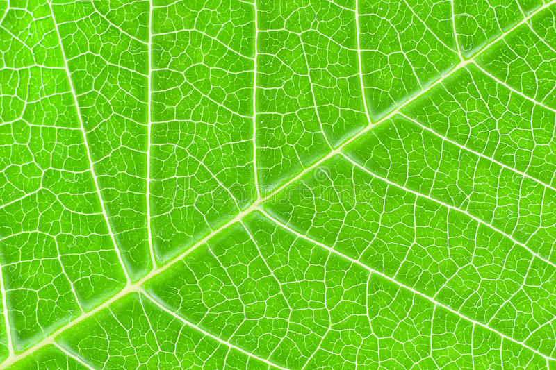 Download Leaf Texture Stock Images - Image: 18639094