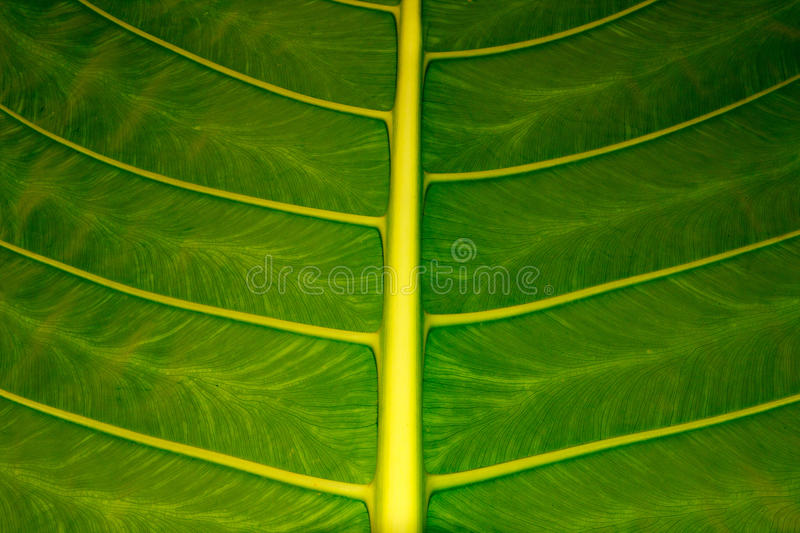 Download Leaf texture stock image. Image of bright, ecology, detail - 27381833