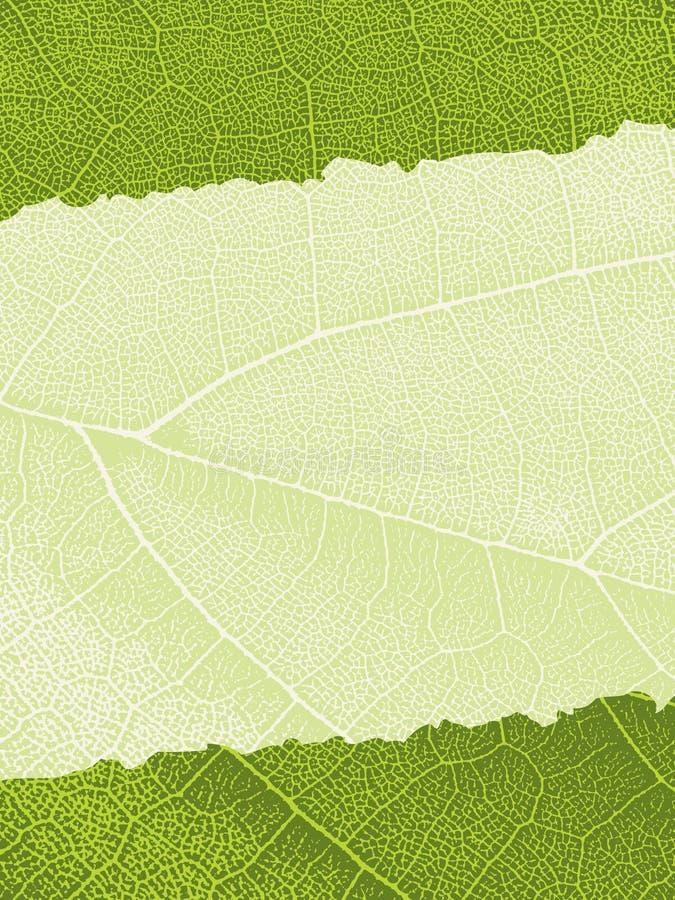 Leaf texture background vector illustration