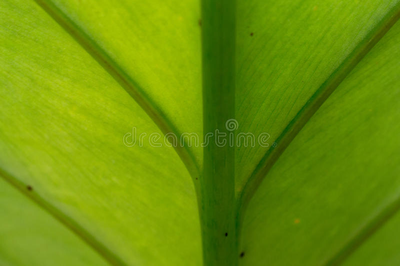 Leaf texture for background royalty free stock images