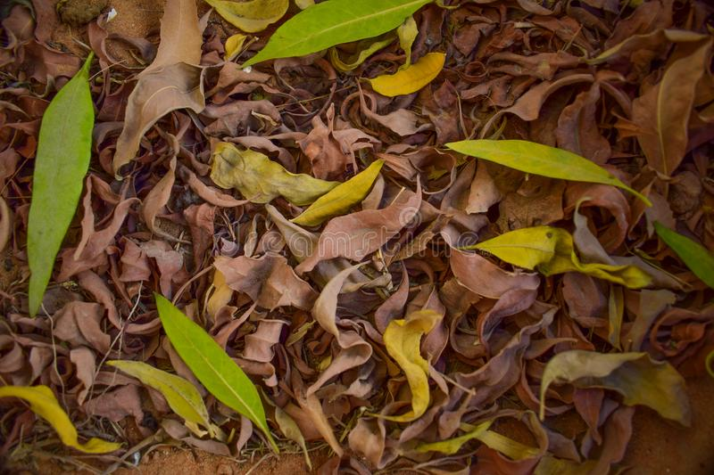 Leaf texture close look of nature royalty free stock image
