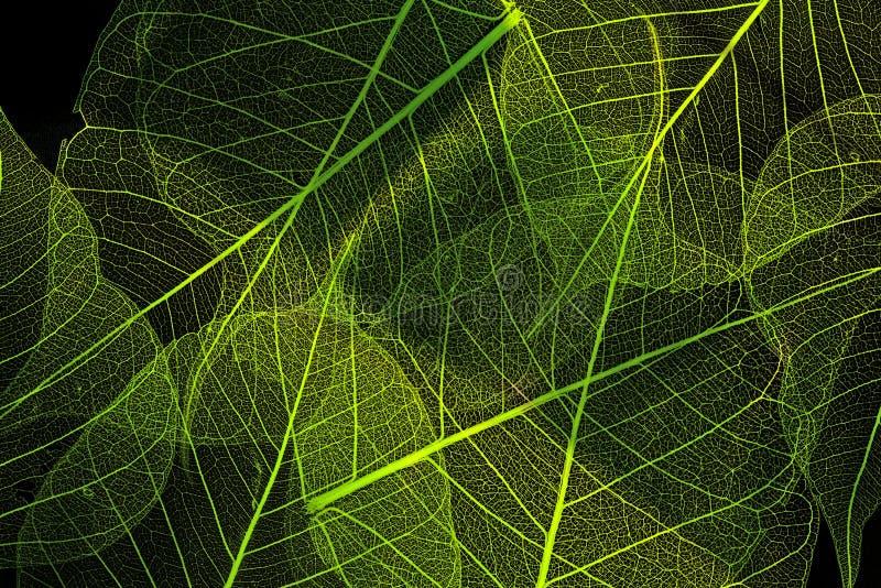 A leaf texture royalty free stock photos