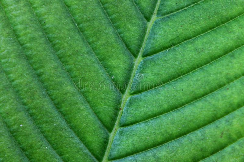 Leaf texture, foliage nature green background stock image