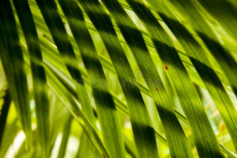 Leaf texture stock photography