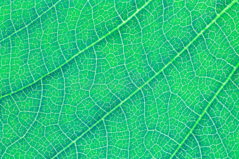 Leaf texture pattern background for graphic design. Leaf texture pattern background for graphic website template. spring beauty. environment and ecology idea stock photos