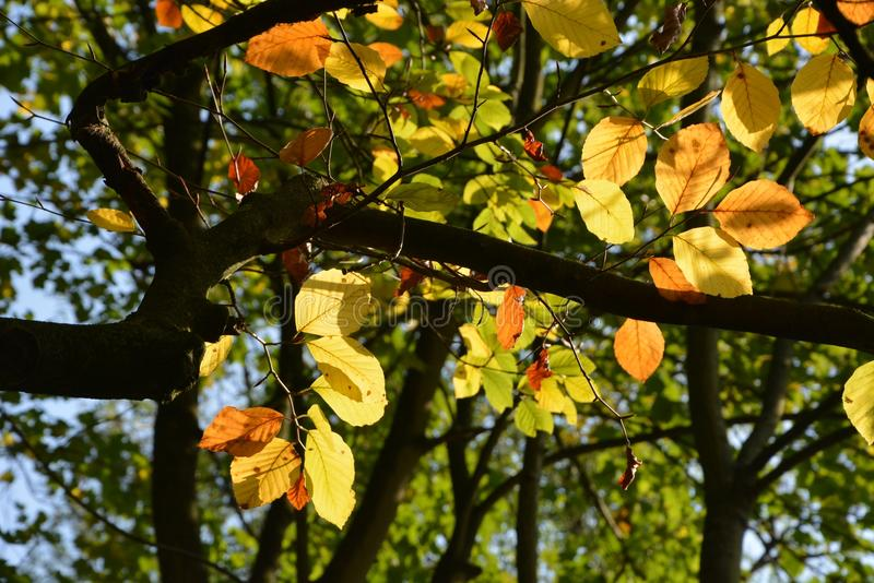 Leaf, Tree, Autumn, Branch royalty free stock photography