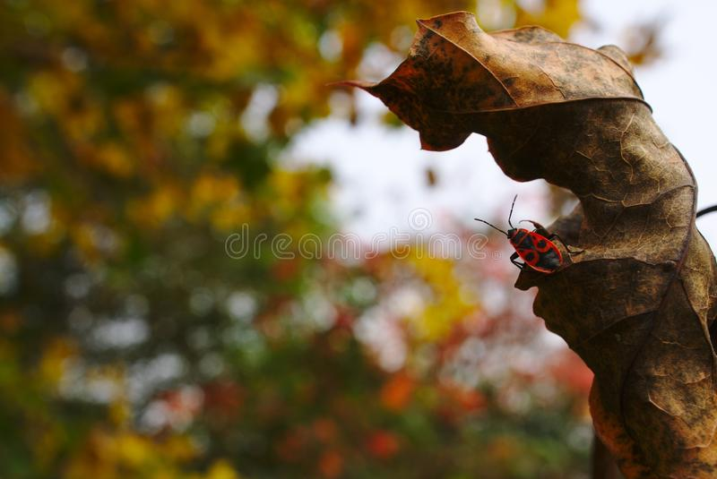 Leaf, Tree, Autumn, Insect royalty free stock photos