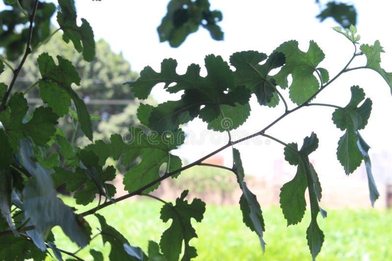Leaf, Tree, Branch, Plant Free Public Domain Cc0 Image