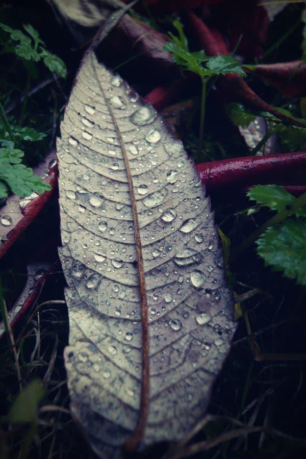 leaf of tree after rain stock image