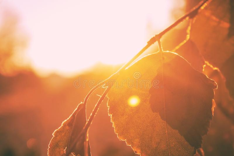 Leaf under the rays of the morning sun stock image