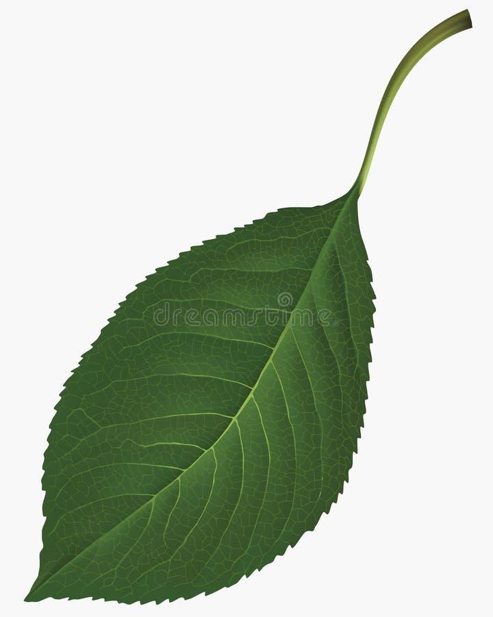 Download Leaf. Vector illustration stock vector. Illustration of illustration - 31820075