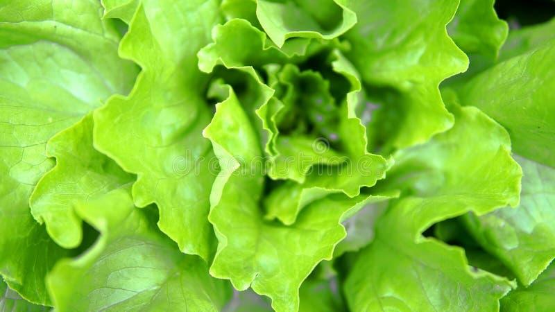 Leaf Vegetable, Leaf, Vegetable, Lettuce Free Public Domain Cc0 Image