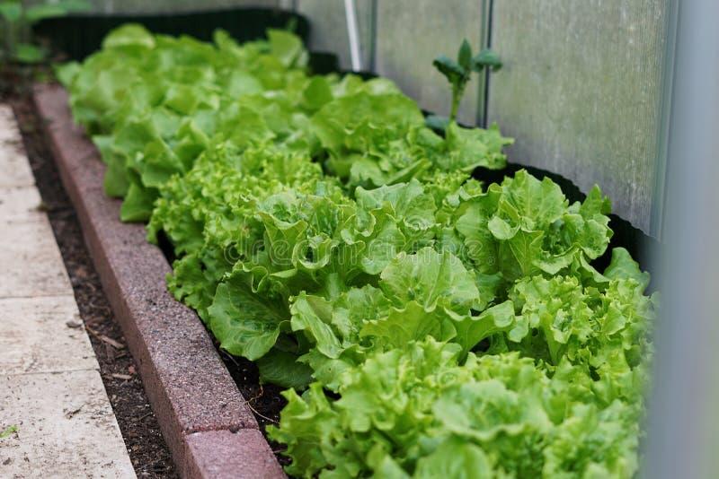 Leaf Vegetable, Lettuce, Vegetable, Produce Free Public Domain Cc0 Image