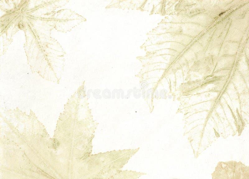 Leaf Veins royalty free stock images