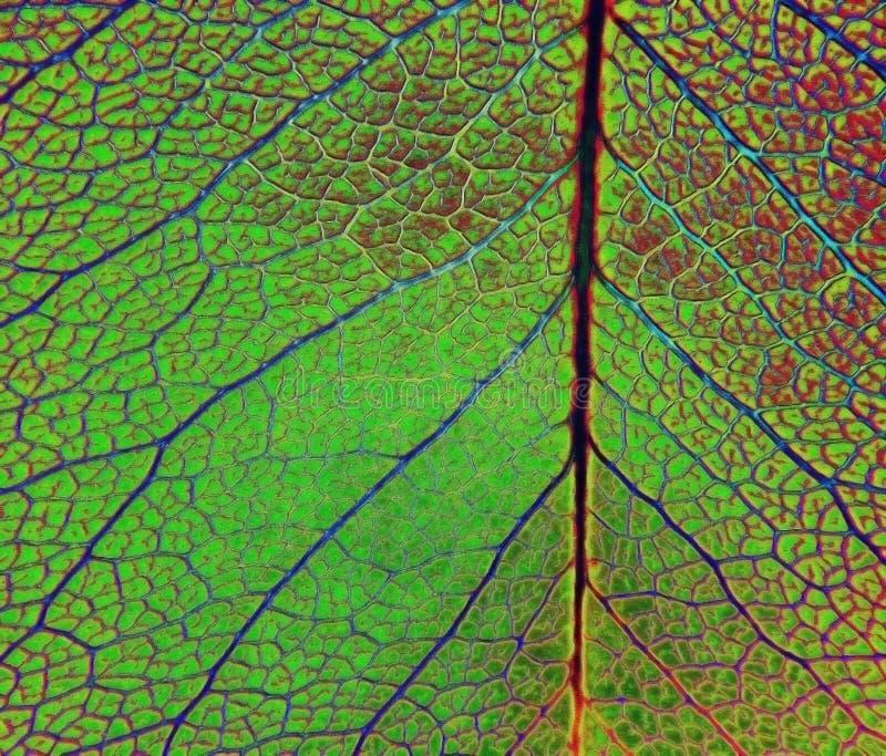 Download Leaf Veins stock photo. Image of macro, details, leaves - 5289482