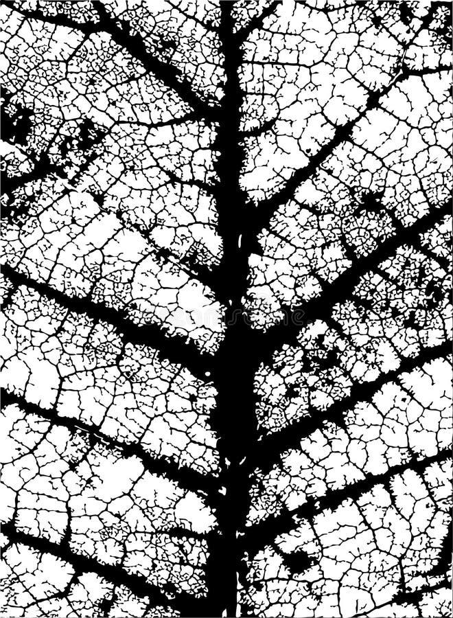 Leaf veins vector illustration