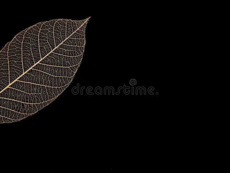 leaf veins pattern royalty free stock photo