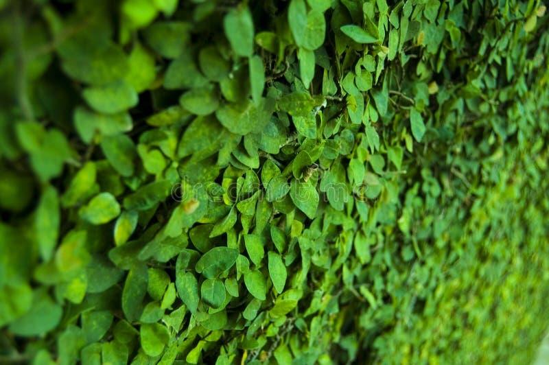 Leaf on Wall