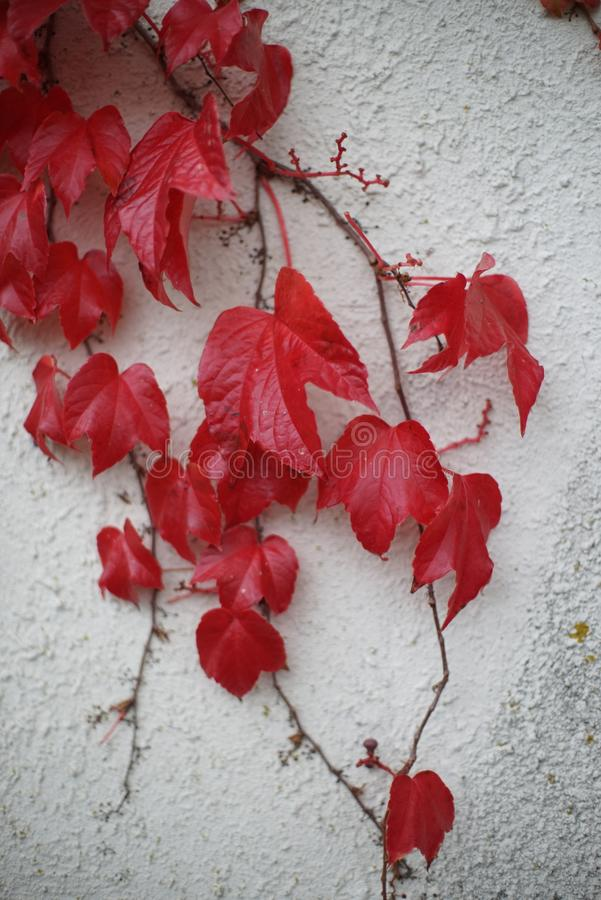 Leaf on The Wall stock photo