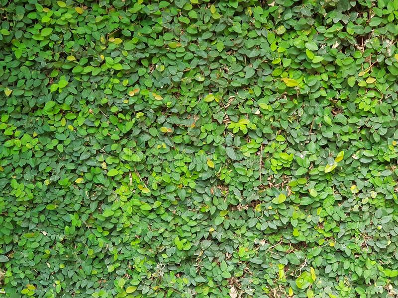 Leaf wall stock photography