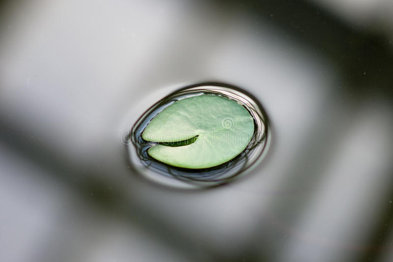 Leaf on Water stock photo