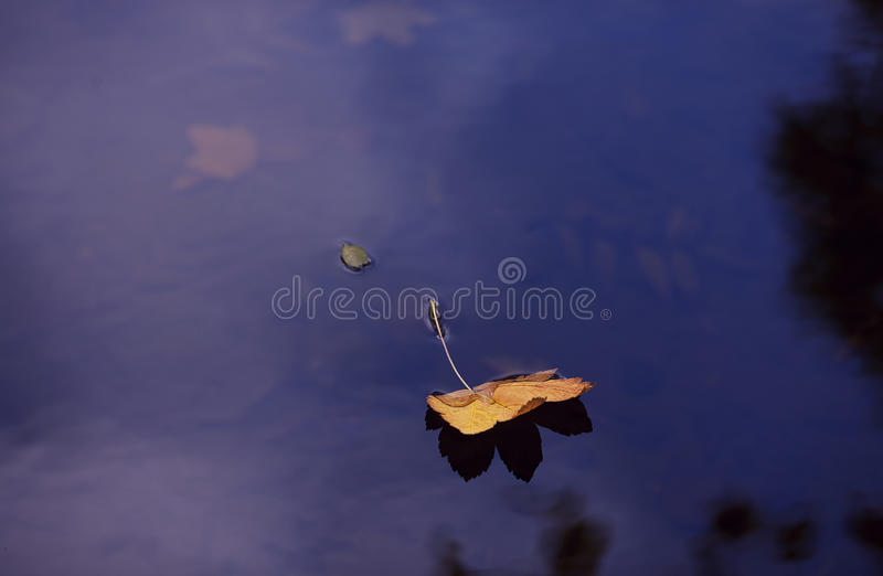 Fall leaves water. Blue stock photos