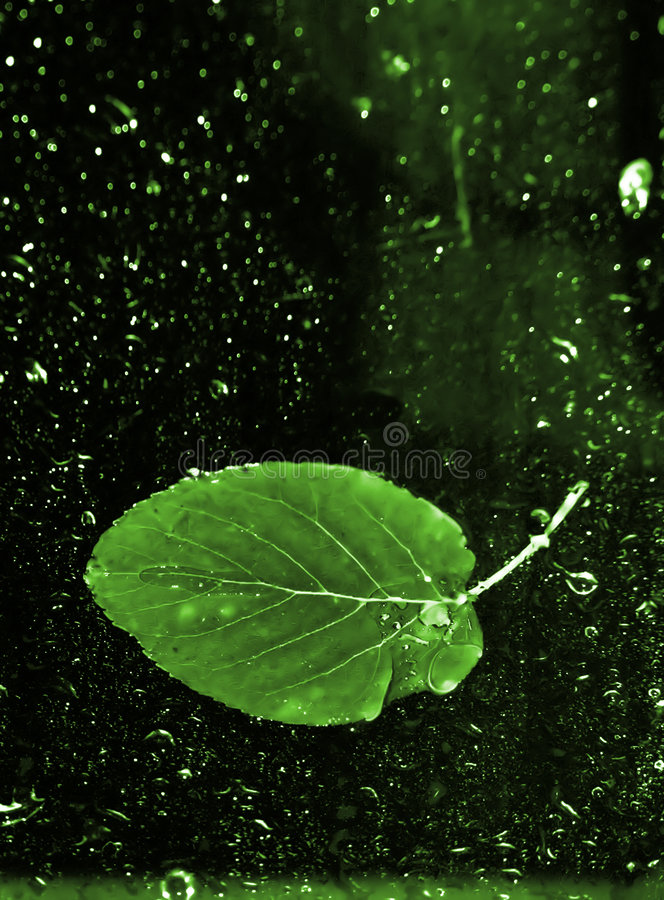 Leaf And Water Stock Photo