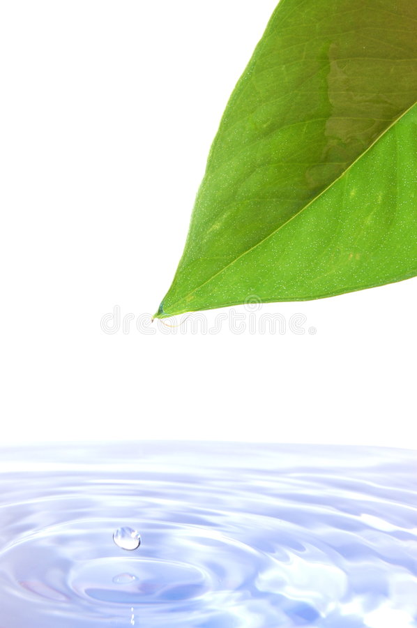 Leaf and water stock photography