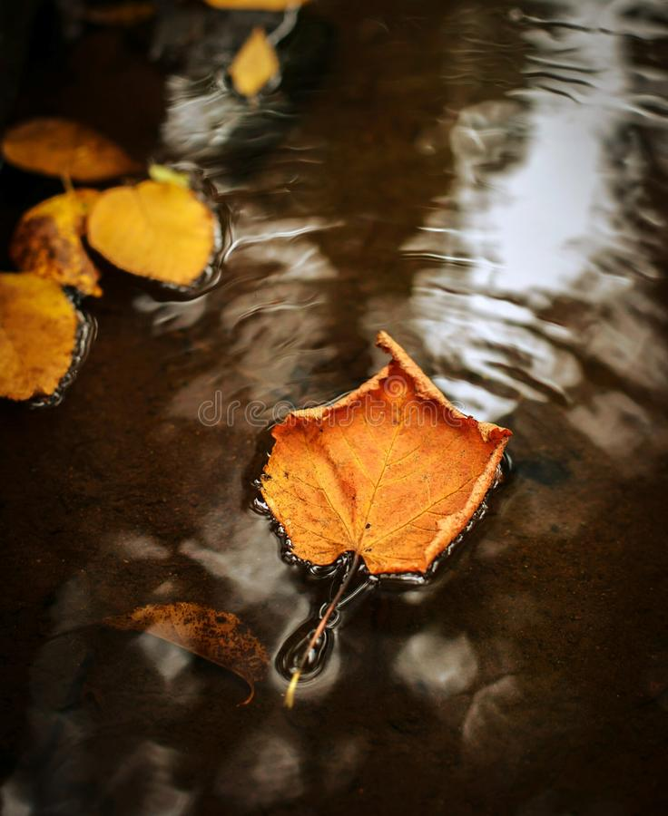 Leaf on water. A closeup click of leaf waving on water royalty free stock images
