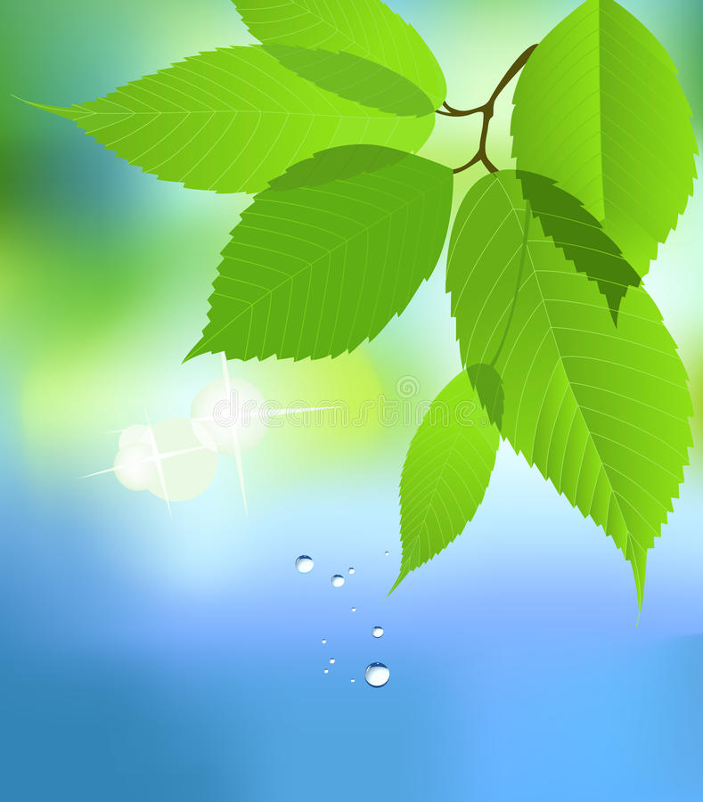 Leaf with Water Drop. royalty free illustration