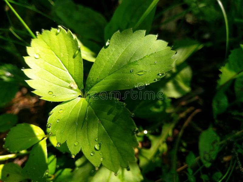 Leaf with water droplets stock photography
