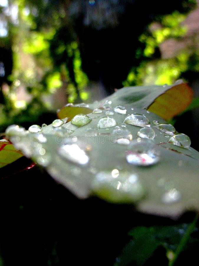 Leaf and water droplets stock photography